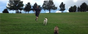 Hill sprints also gives the dogs a good workout as well :)